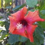 alarksnest-flower